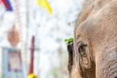 Глаз слон — Стоковое фото