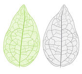 Leaf detail abstract vector illustration. — Vettoriale Stock