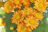 Flores en el jardín con desenfoque de fondo — Foto de Stock