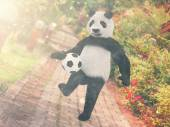 Panda football player. chasing soccer ball foot against backdrop Resort Thailand. juggling ball bear. character background paving stones road stretching into distance. edges with red tropical flowers. — Stock Photo
