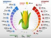 Vitamins and minerals of corn cob — Stock Vector