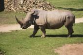 Nosorožce v zoo parku. — Stock fotografie