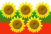 Five large sunflowers isolated on background Bulgarian flag. — Zdjęcie stockowe