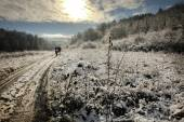 Winter sunny road in snowy forest landscape — Stock Photo