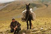 Man shepherd holding a horse by the bridle — Stock Photo