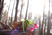 Tulpaner i korg solljus — Stockfoto