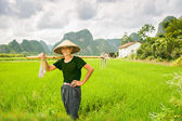 Rice farm — Stock Photo