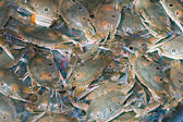 Sand crab of Phu Quoc Island — Stock Photo