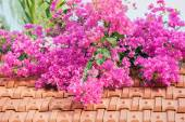 Miracle of the blossoming — Stock Photo