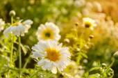 Spring flower fields — Stock Photo