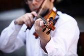 Hrají housle — Stock fotografie