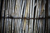 Reed and barbed wire — Stock Photo