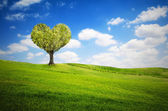 Tree in the shape of heart for valentines day — Stock Photo