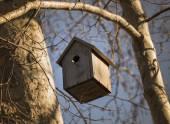 Birdhouse on the tree — Stock Photo