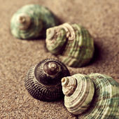 Shells in the sand — Stock Photo