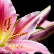 Bouquet of pink lilies — Stock Photo #53394683