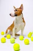 Dog tennis balls — Stock Photo
