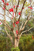 Lots of wishing ribbon hanging on blessing tree — Stock Photo