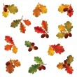 Autumn icon set. Fall leaves and berries. — Stock Vector #53160323