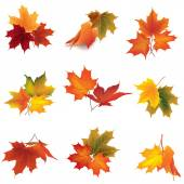 Autumn icon set. Fall leaves and berries. — Stock Vector