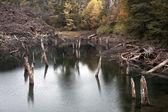 Arcoiris Lagoon from Conguillio national park — Stock Photo