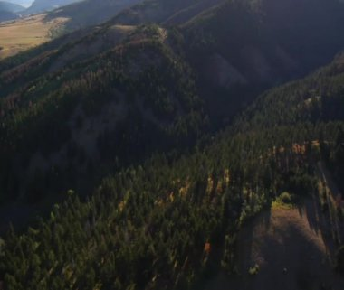 Forested canyon — Stock Video