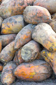 Fodder beets — Stock Photo