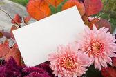 Flores de otoño — Foto de Stock