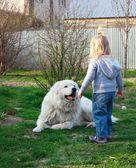 Büyük beyaz çoban köpeğiyle oynayan küçük şirin bebek kız — Stok fotoğraf
