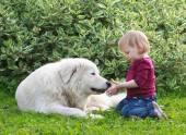 彼女の大きな白い羊飼い犬と遊ぶかわいい幼児少女 — ストック写真