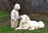 Niña linda del niño jugando con su perro pastor blanco grande — Foto de Stock