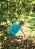 Little blonde girl in a dress gathers fallen apples in the garde — Stock Photo