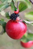 Mondo di plastilina - Piccolo istrice fatti in casa che si siede sulla mela con — Foto Stock