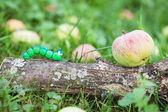 Plasticine world - little homemade green caterpillar crawling on — Stock Photo