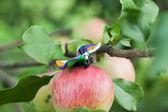 Plasticine world - little homemade multicolored butterfly is sit — ストック写真