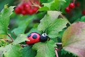 Plasticine world - little homemade red ladybird sitting on a lea — Stock Photo
