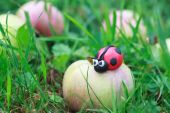 Plasticine world - little homemade red ladybird sitting on a fal — Stock Photo