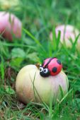 Plasticine world - little homemade red ladybird sitting on a fal — Stockfoto