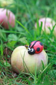 Plasticine world - little homemade red ladybird sitting on a fal — Stock fotografie