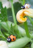 Plasticine world - little homemade white and orange ladybugs sit — Photo