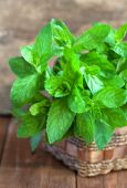 Bunch of fresh green mint in a basket on a wooden table, selecti — Stock Photo