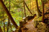 Old river trail — Foto Stock