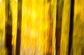 Fall abstract — Stock Photo