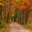 ������, ������: Path in a Fall Woods
