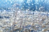 Winter snowy landscape — Stock Photo