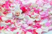 Roses petals background. — Stock Photo