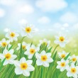 Daffodils flowers on background — Stock Vector #67702061