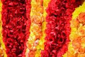 Rose decorative — Foto Stock