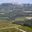 Vineyards on the hills of Langhe — Stock Photo #55523739