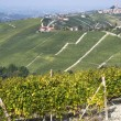 Vineyards on the hills of Langhe — Stock Photo #55524301